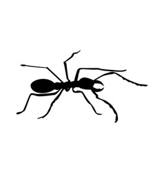 Ant silhouette vector