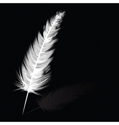 Feather vector