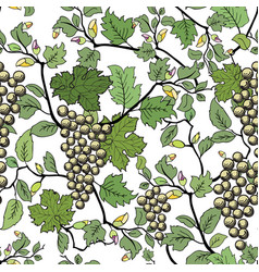 floral seamless background with grape branch vector image