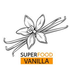 Icon superfood vanilla vector