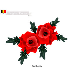 red poppies the popular flower of belgium vector image