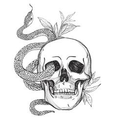 Skull and Snake Vintage vector