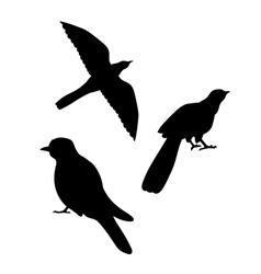 Cuckoo bird silhouettes vector
