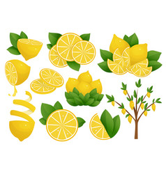 Set lemon slice on white vector