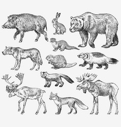 Set of wild animals brown grizzly bear forest vector