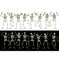 Fun skeletons vector image vector image