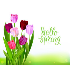 Lettering tulip spring banner vector