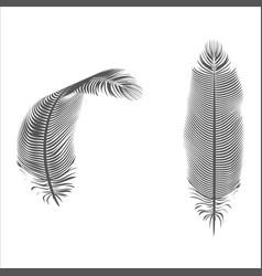 Silhouette feather pen isolated bird design vector