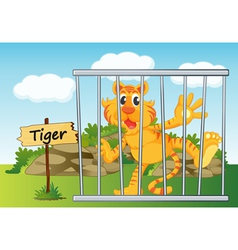 Tiger zoo vector