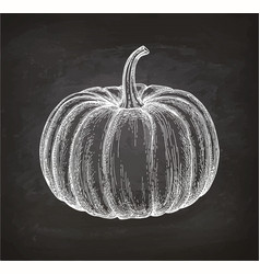 Chalk sketch of pumpkin vector