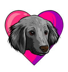 i love dogs icon design vector image