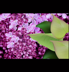 lilac flowers background realistic spring vector image