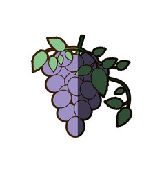 White background with bunch of grapes icon with vector