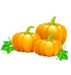 three beautiful ripe pumpkins vector image vector image