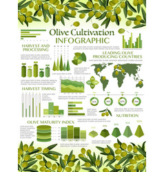 Infographics green olive oils consumption growth vector