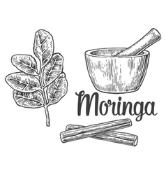 Moringa leaves and pod Mortar and pestle vector