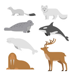 northern and arctic animals vector image