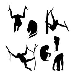 Orangutan monkey silhouettes vector