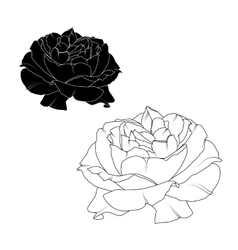 Realistic rose flower bloom black white isolated vector