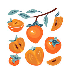 set fresh persimmon collection different vector image