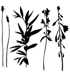 set of herbs and flowers silhouettes vector image