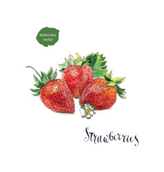 3 fresh strawberries with flower and leaves vector
