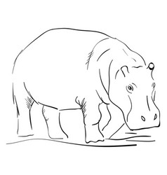 hippo drawing on white background vector image