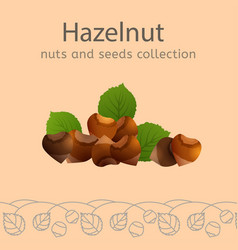 nuts collection image vector image