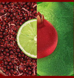 pomegranate and lime vector image
