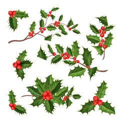 realistic holly mistletoe leaves set vector image