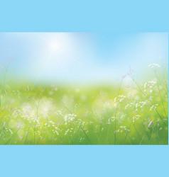 spring flowers sky vector image