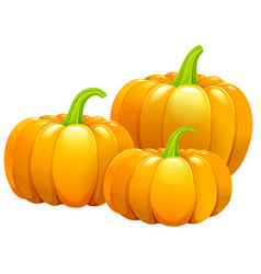 three beautiful pumpkins without leaves vector image