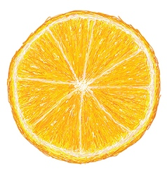 Unique style of orange fruit cross section closeup vector