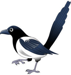 magpie vector image