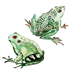 Watercolor hand drawn frog vector