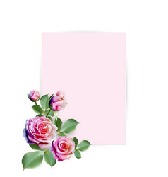 colorful roses decorated on pink paper background vector image