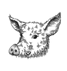Hand drawn pig sketch symbol vector