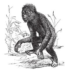 Orangutan vintage engraving vector