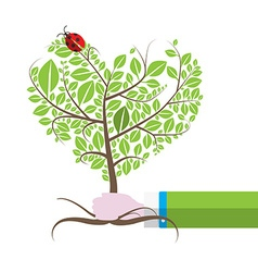 Tree in Human Hand with Ladybird Ladybug Isolated vector image