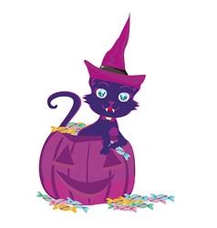 cat on a Halloween pumpkin vector image