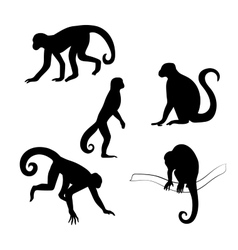 Capuchin monkey silhouettes vector image