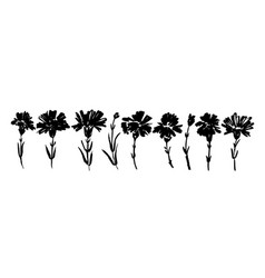 Carnation hand drawn paint set vector