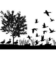Flock of ducks vector