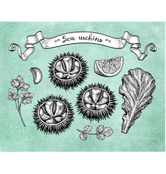 Ink sketch urchin vector