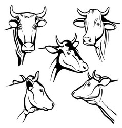 Isolated cow head portraits cattle faces vector