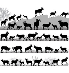 Silhouettes of bighorn sheeps rams and lambs vector
