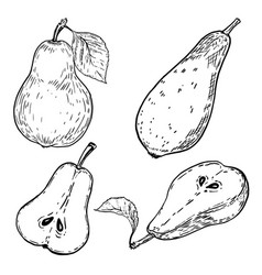 set of hand drawn pears on white background vector image vector image