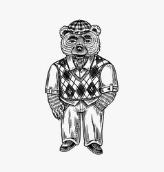 bear in a sweater and a tweed cap argyle pattern vector image