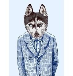 Husky in jacket vector