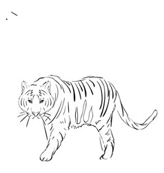 tiger drawing on white background vector image